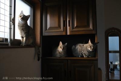 4匹の猫。