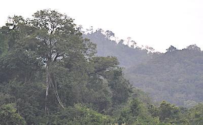 熱帯季節林