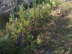 181022トマト畑後