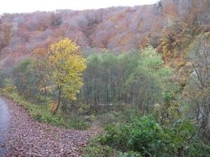 181101枯れ木もきれい