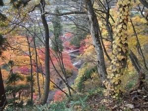 181108赤い橋が見える