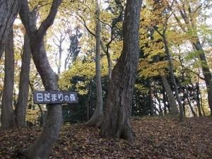 181108日だまりの森