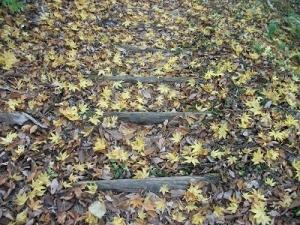 181108落ち葉もきれい