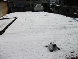 190314雪の畑