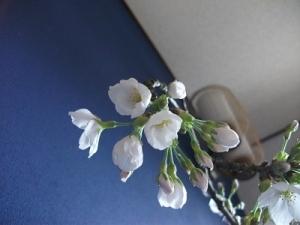 190403開花下から