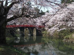 190422杉の大橋