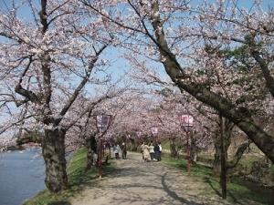 190422桜のトンネル