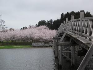 190425橋と桜