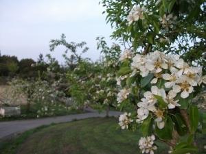 190509また違う花