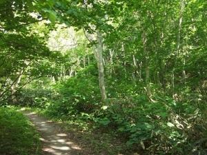 190613森林浴