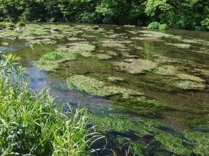 190613グダリ沼の流れ