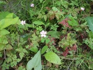 190715花