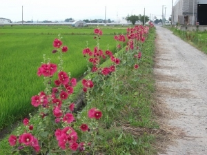 190711赤い花