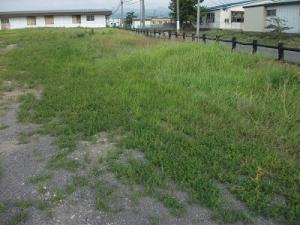 190725草が生えている