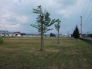 190725野球場の向こう
