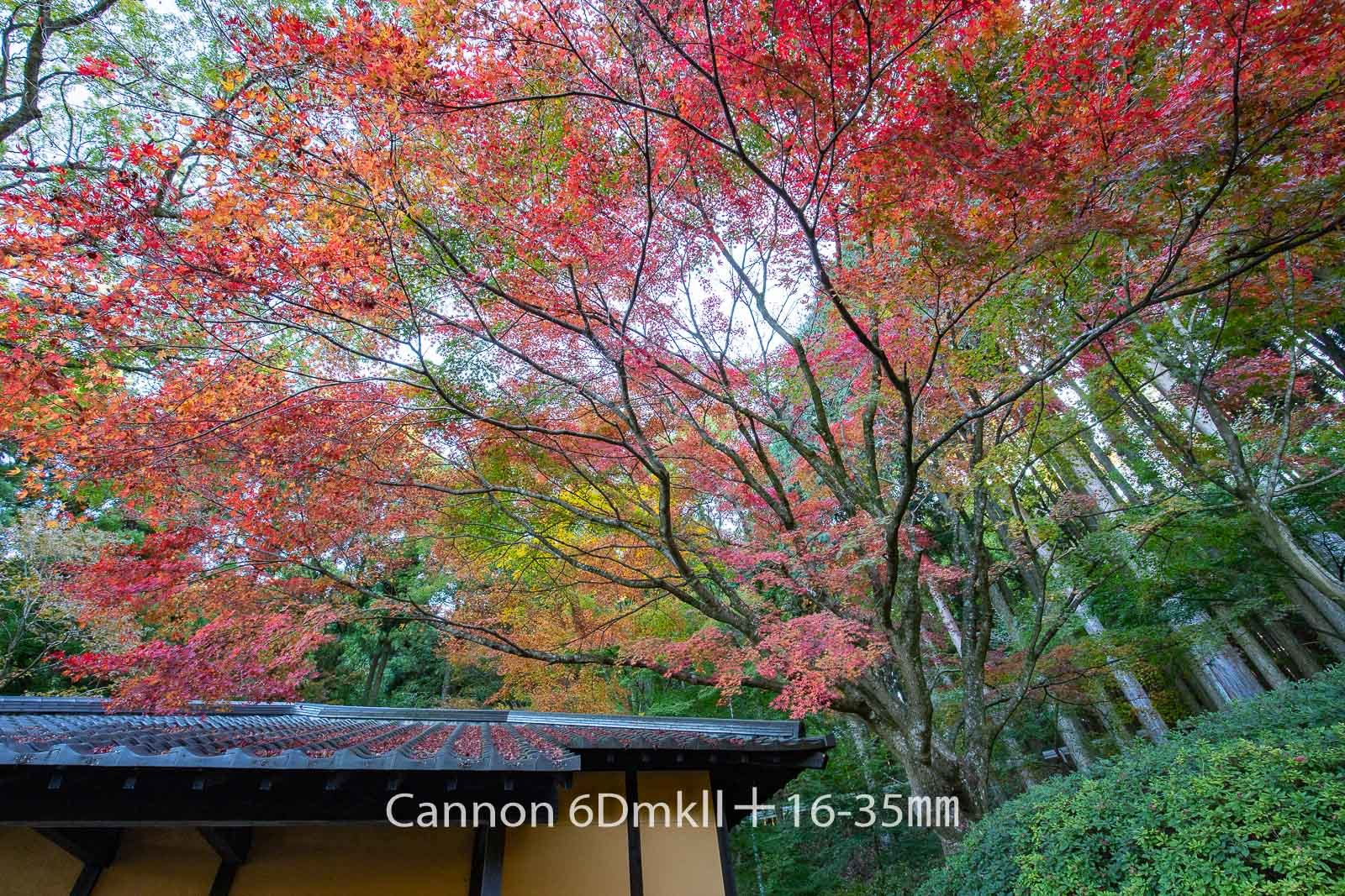 181103 英彦山紅葉6ⅮⅡ-02 Canon EOS 6D Mark II ISO 200 16 mm 6240 x 4160