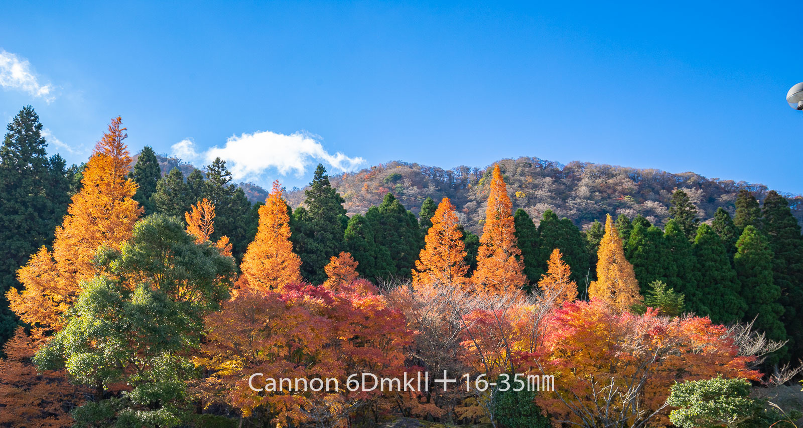 181103 英彦山紅葉6ⅮⅡ-11 Canon EOS 6D Mark II ISO 200 30 mm 6240 x 3326