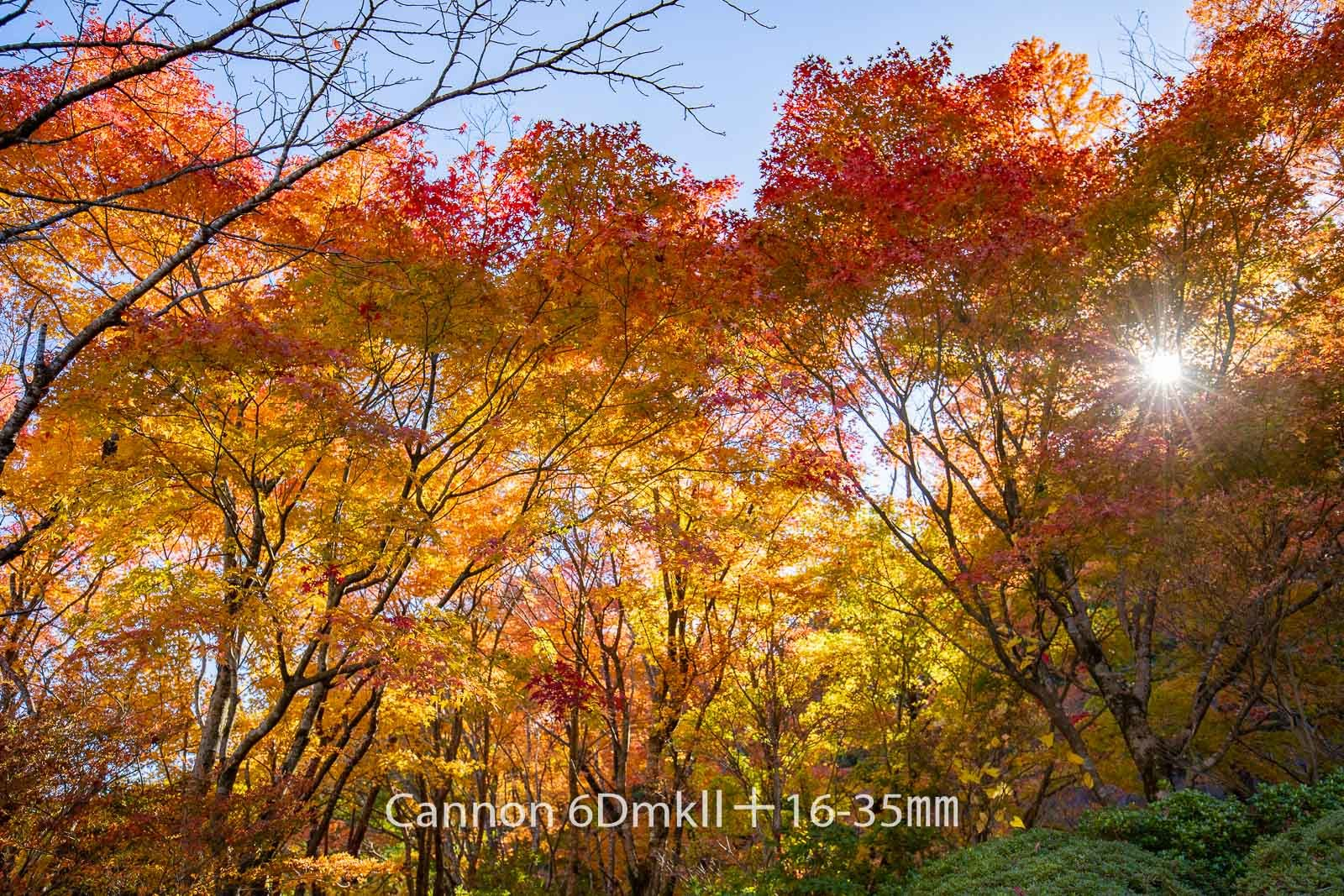 181103 英彦山紅葉6ⅮⅡ-19 Canon EOS 6D Mark II ISO 200 27 mm 6240 x 4160