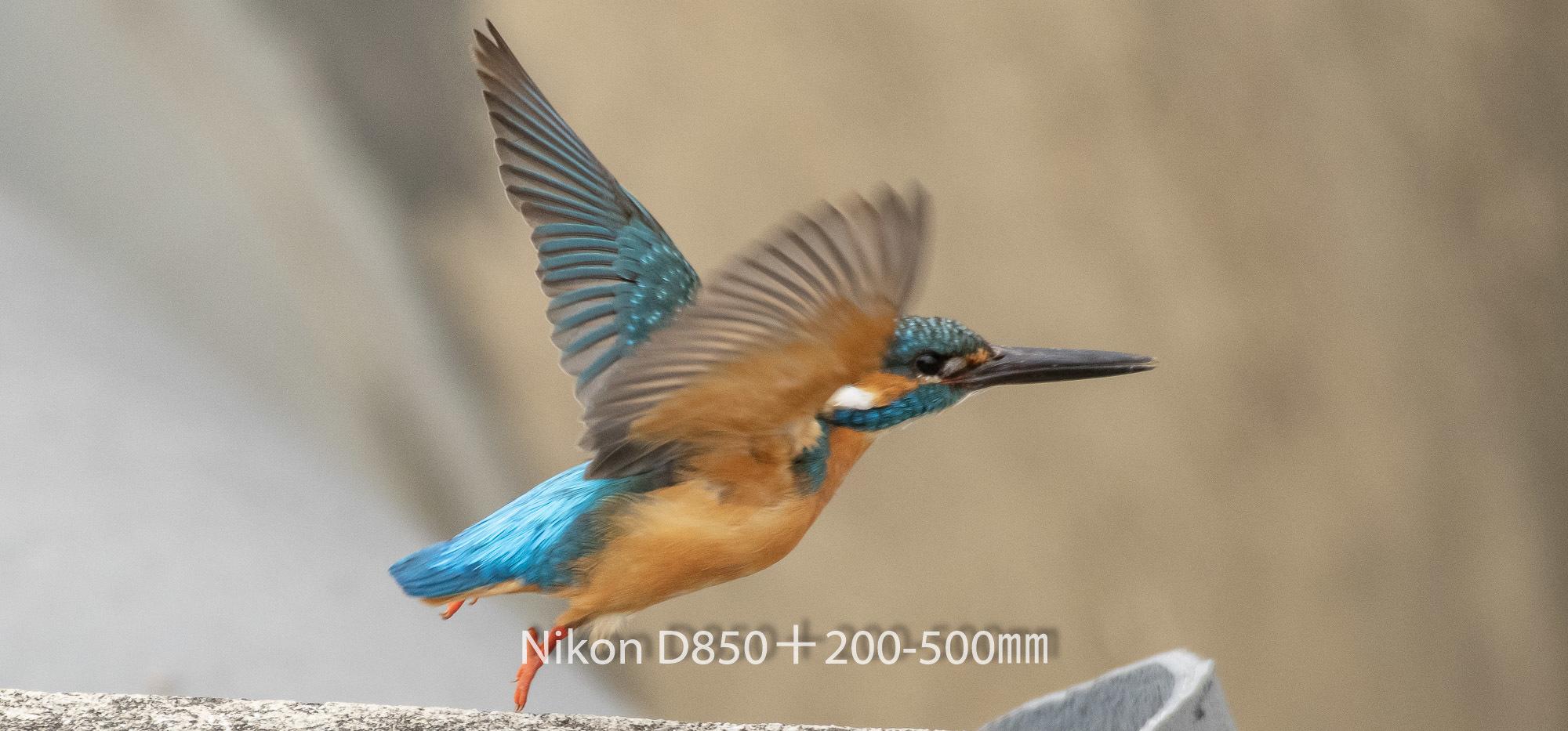 190331 カワセミ-07 NIKON D850 ISO 1400 500 mm 3923 x 1831