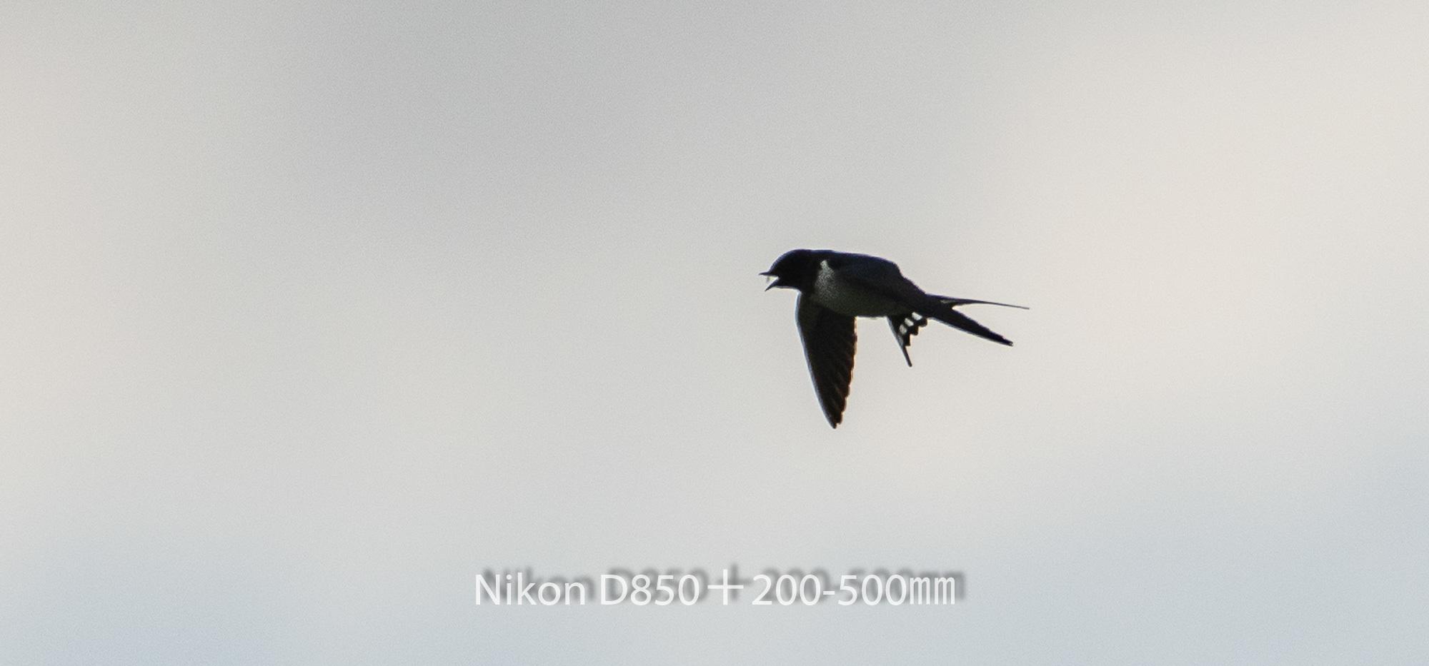 190331 ツバメ-03 NIKON D850 ISO 80 500 mm 1627 x 759