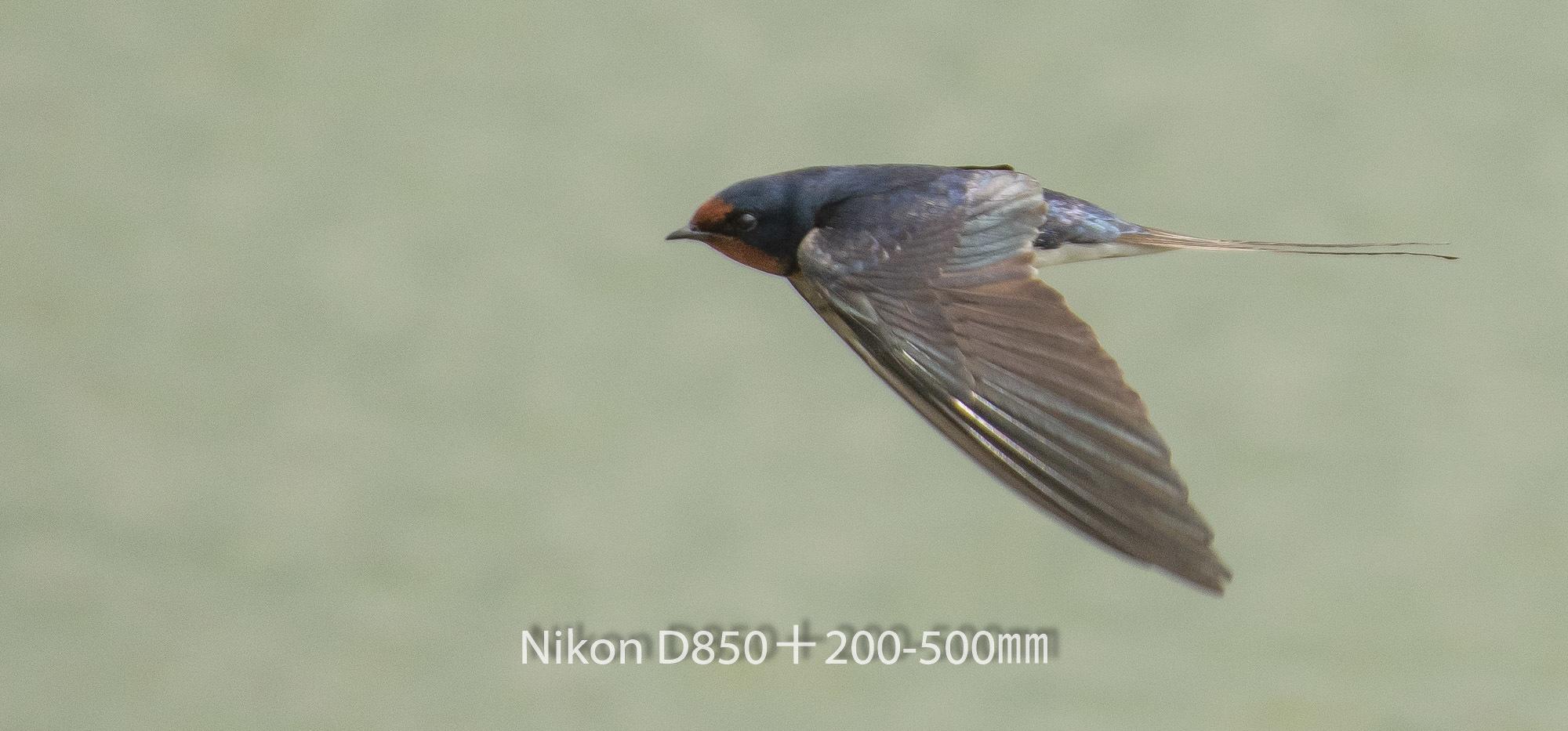 190331 ツバメ-04 NIKON D850 ISO 640 500 mm 2593 x 1210