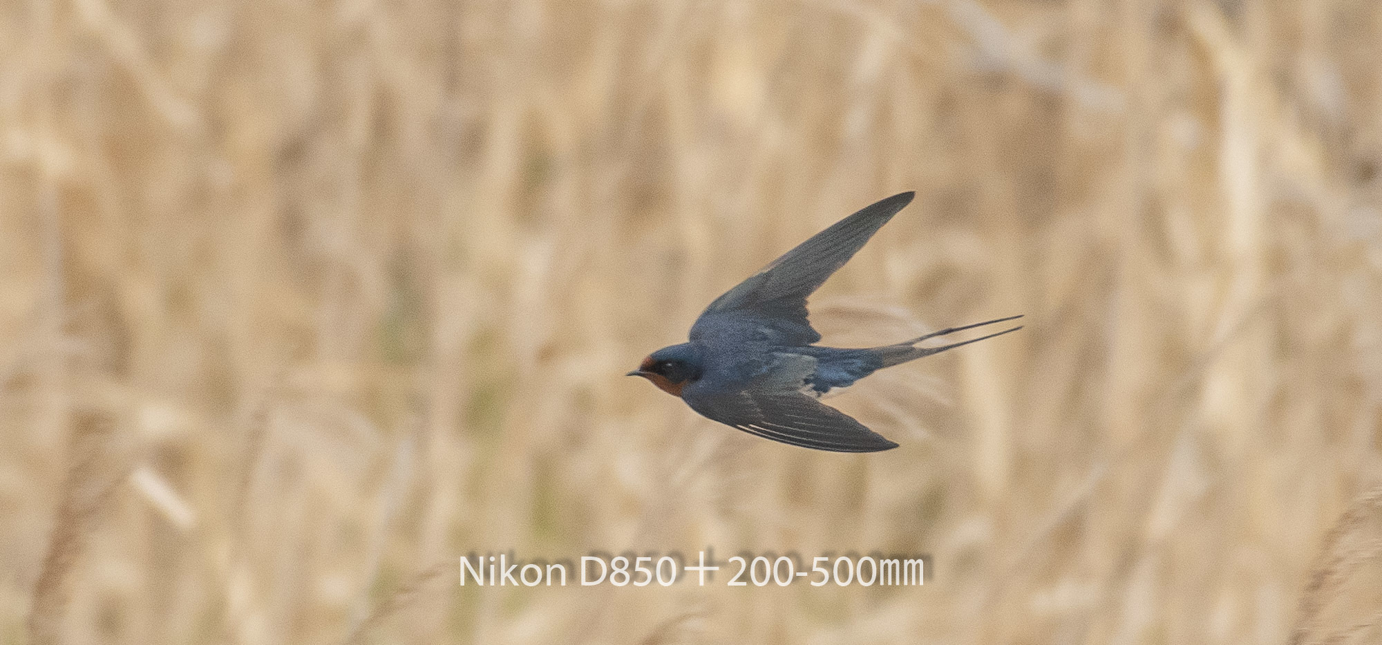 190331 ツバメ-07 NIKON D850 ISO 800 500 mm 2070 x 966