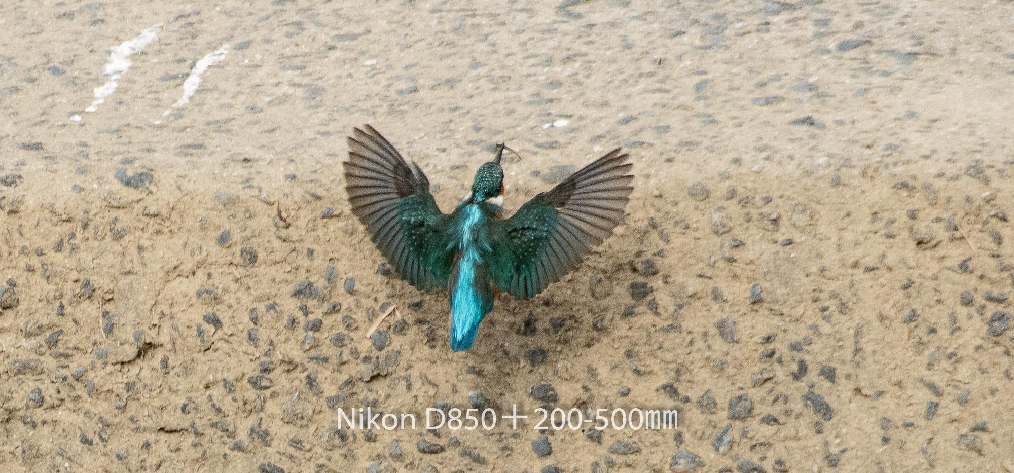 190401 カワセミ-21 NIKON D850 ISO 1800 500 mm 2541 x 1186