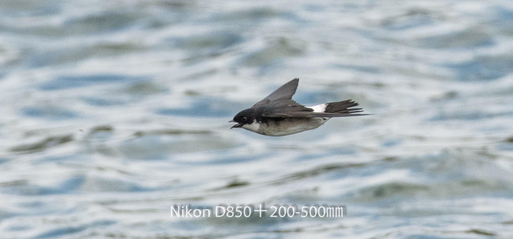 190401 ツバメ-03 NIKON D850 ISO 1250 500 mm 2541 x 1186