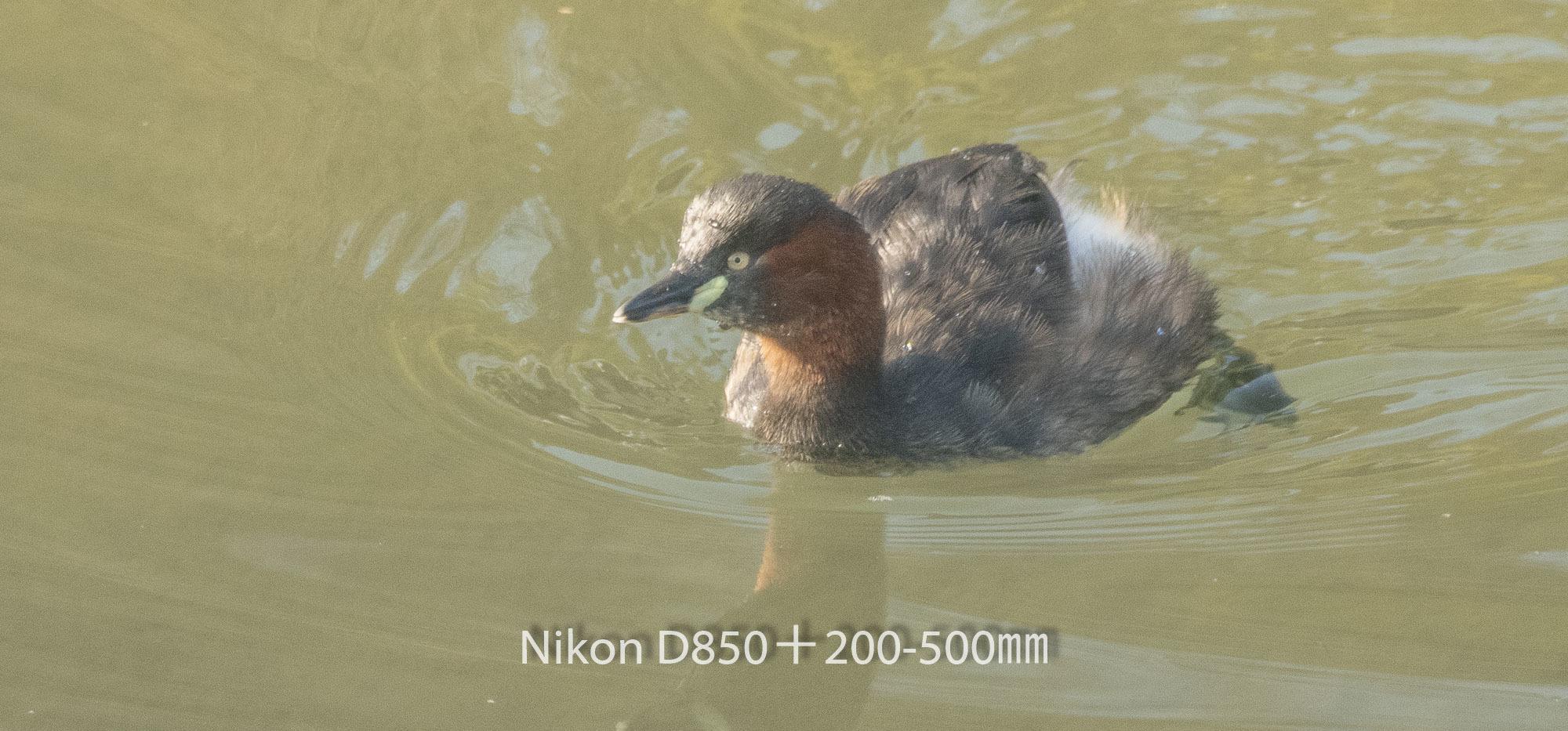 190402 カイツブリ-03 NIKON D850 ISO 1600 500 mm 3004 x 1402