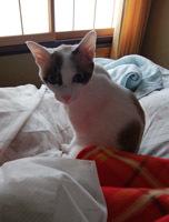 Minaは母のベッドb