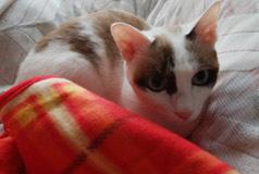 Minaは母のベッドa