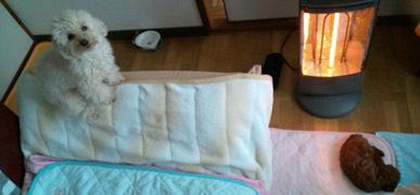 ちびRose 20100222-1