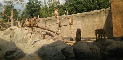 201810 常盤動物園 サル