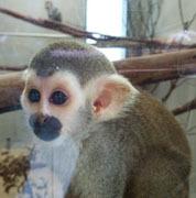 201810 常盤動物園 猿