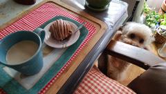 181008 母気晴らしデー お茶の時間2