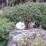 190222 紅葉谷の猫達2