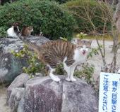 190222 紅葉谷の猫達3