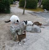 190222 紅葉谷の猫達4