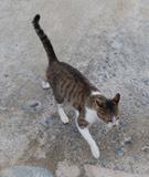 190222 紅葉谷の猫達