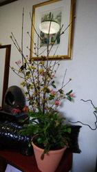 190307 今日のお花a