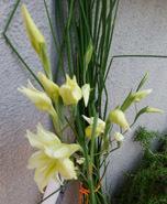 190413 夜香りのよい花