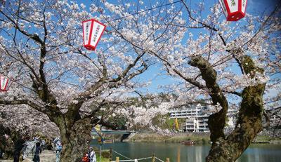 190401 桜・錦帯橋1