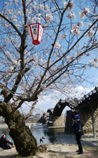 190401 桜・錦帯橋3