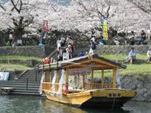 桜船 川下り