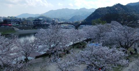 190401 桜・錦帯橋4