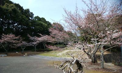190329 テクテク⑧山頂の桜