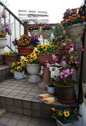 190416 外階段のお花達a
