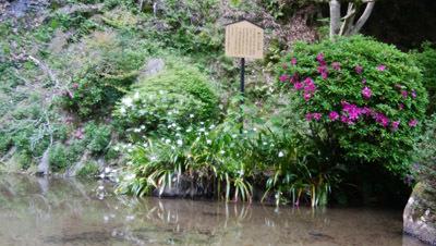 190502 も<br />みじ谷の池1