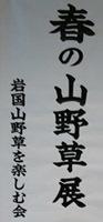 190420 山野草展