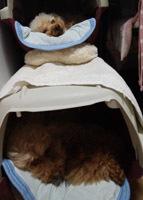 190629 クレートの住犬